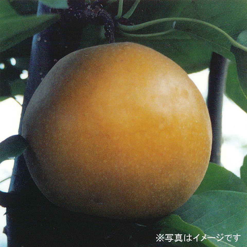 wan007