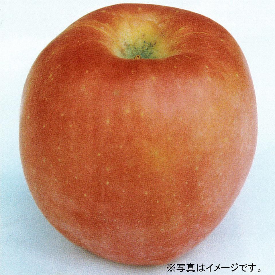 rin015